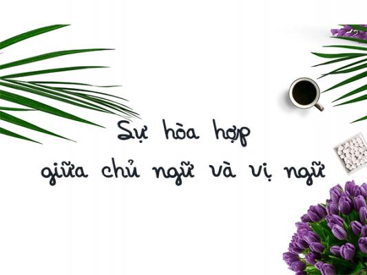 su hoa hop chu ngu vi ngu 533x400 - Hòa hợp chủ ngữ vị ngữ
